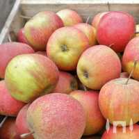 Apfel Rubinette • Malus Rubinette