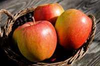 Apfelbaum Braeburn • Malus Braeburn
